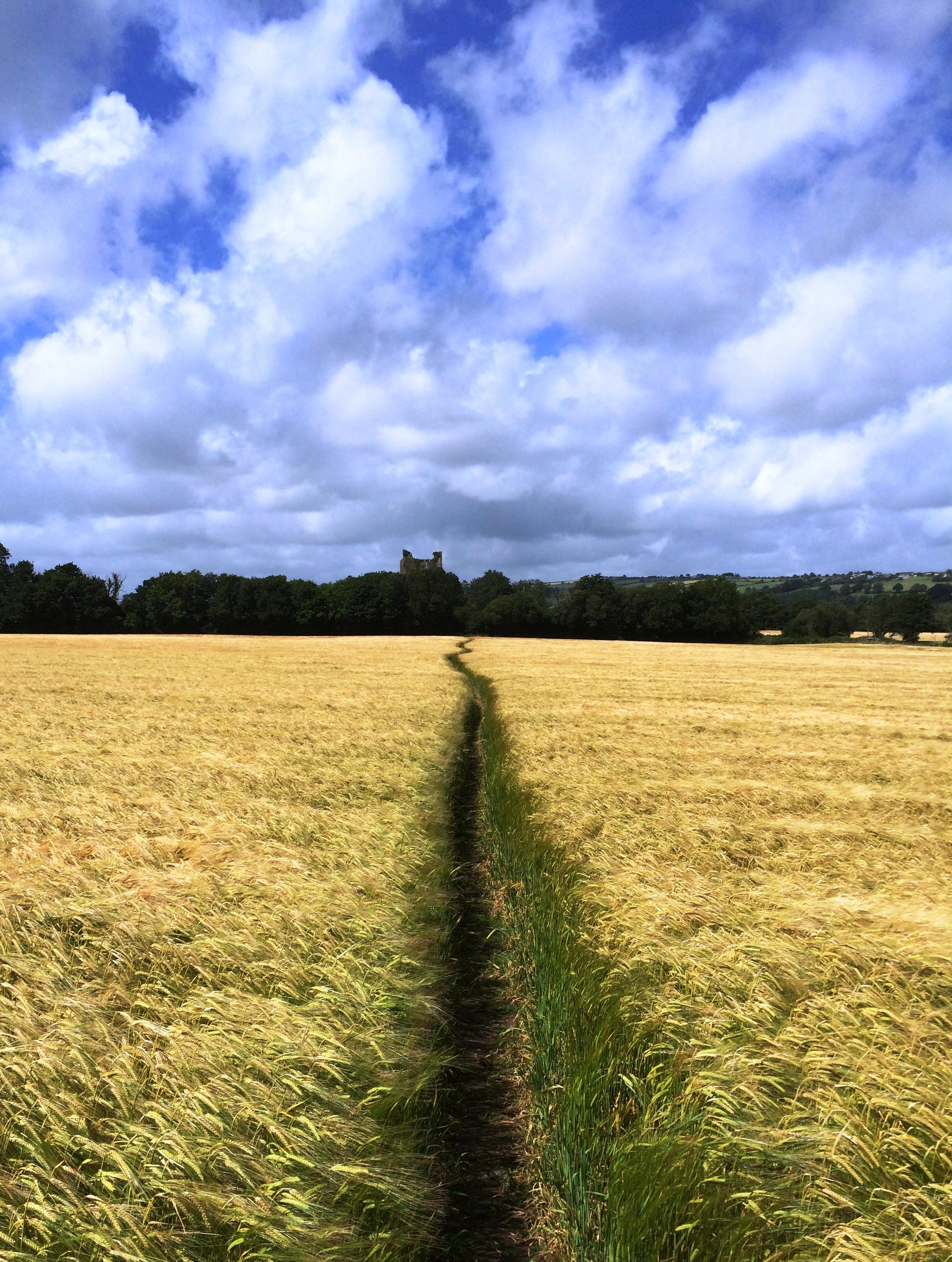 ... : Worn Path essays; Title: Free Essays on Eudora Welty's A Worn Path
